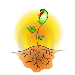 seedling-plant