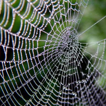 http://seobyswaby.files.wordpress.com/2009/09/spiders-web.jpg?w=1000