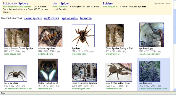spiders SERP
